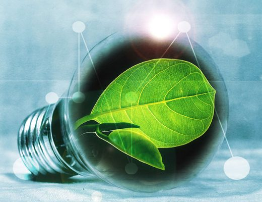 bulb with leaf 520x400 - Our Top 4 Tips for Sustainable Construction Projects