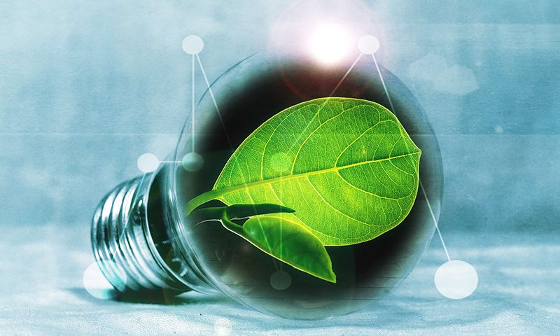 bulb with leaf 800x480 - Our Top 4 Tips for Sustainable Construction Projects